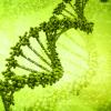 OGM: prove di dialogo?