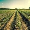 Cambiamenti climatici e danni all'agricoltura: quale ruolo per le assicurazioni?