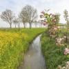 Monitoraggio nazionale dei pesticidi nelle acque. Indicazioni per la scelta delle sostanze