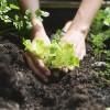La donna protagonista e garante del sano rapporto Alimentazione-Agricoltura-Ambiente