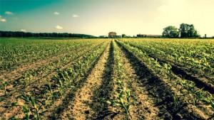 agricoltura_lg_444