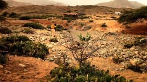 desertific_lg