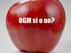 ogm-si-o-no-e1433327179609